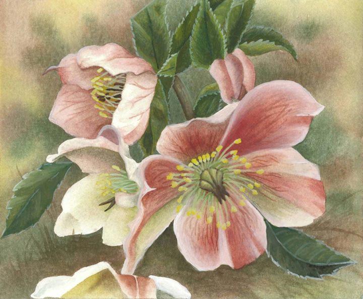 Pink Christmas Roses - Rebekah's Nature Art