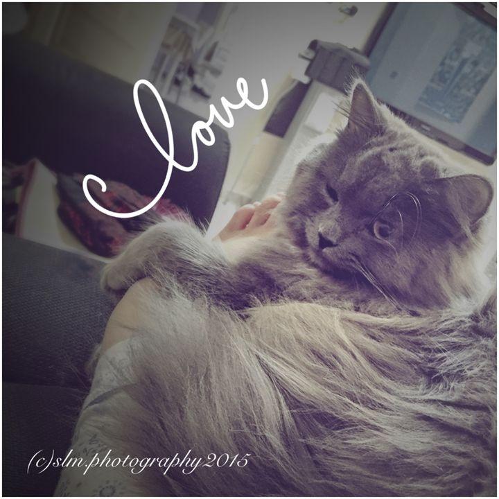 Marilyn Monroe Cat - Kitchie Panget