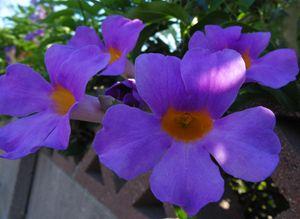 Purple Petal Majesty