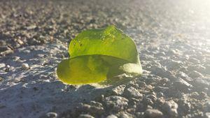 Sunny Leaf on Concrete