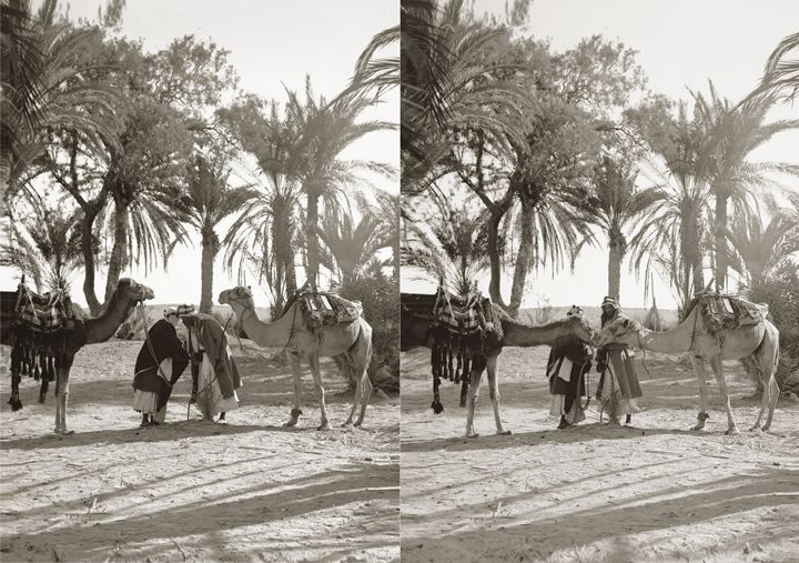 Men and camels greeting, Sinai - Images of the Middle East and the Holy Land