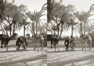 Men and camels greeting, Sinai