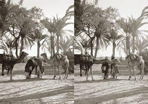 Men and camels greeting, Sinai