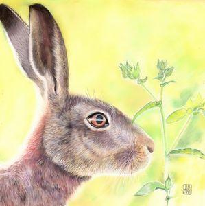 Spring Hare - Art by Julie Henderson