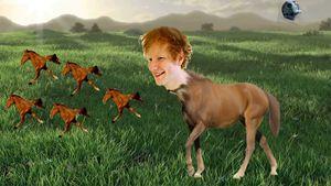 Singing horsie