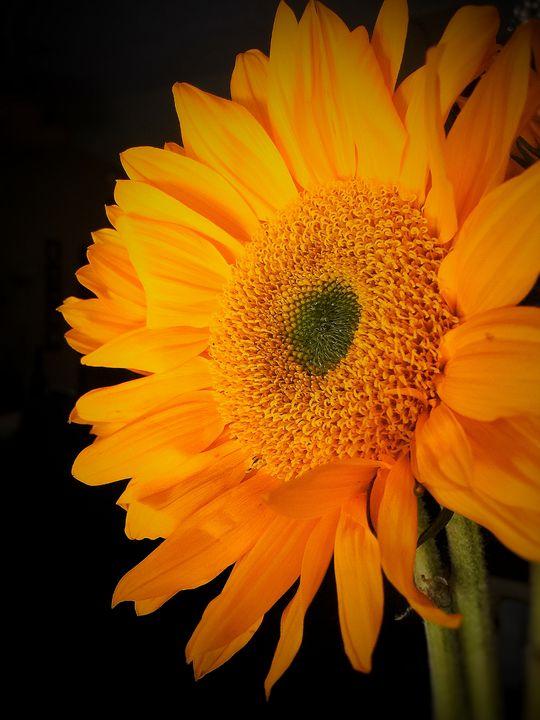 Bloom - SalAnthony