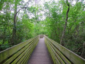 Boardwalk Through the Woods