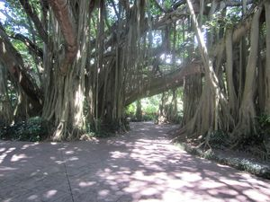 Path Through the Banyan Tree