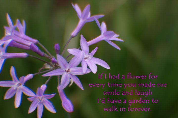 Dainty Purple Flower - JAJ Photography