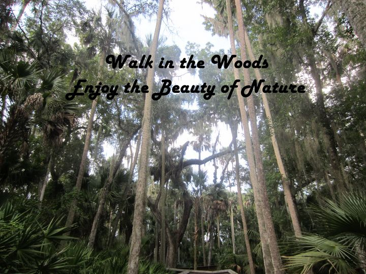 Walk in the Woods - JAJ Photography