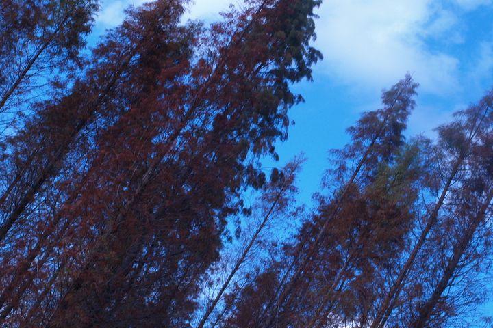Up the Trees - JAJ Photography