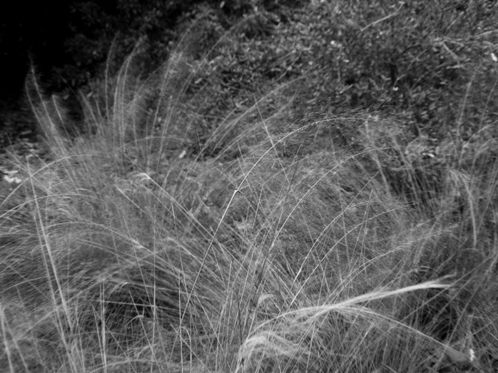 Grass in the Breeze - JAJ Photography