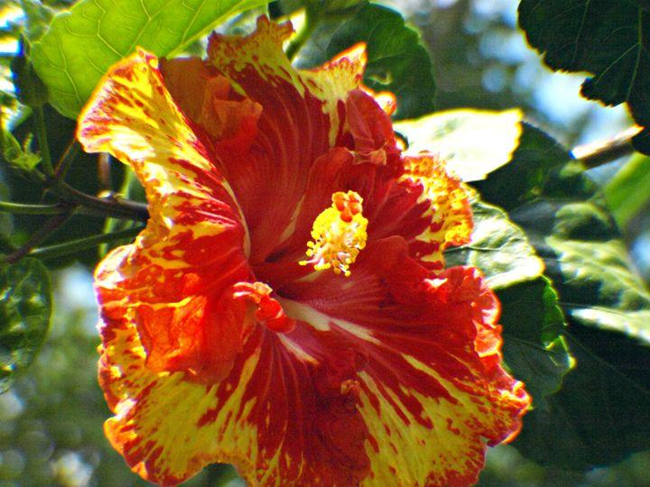 Orange and Yellow Flower - JAJ Photography