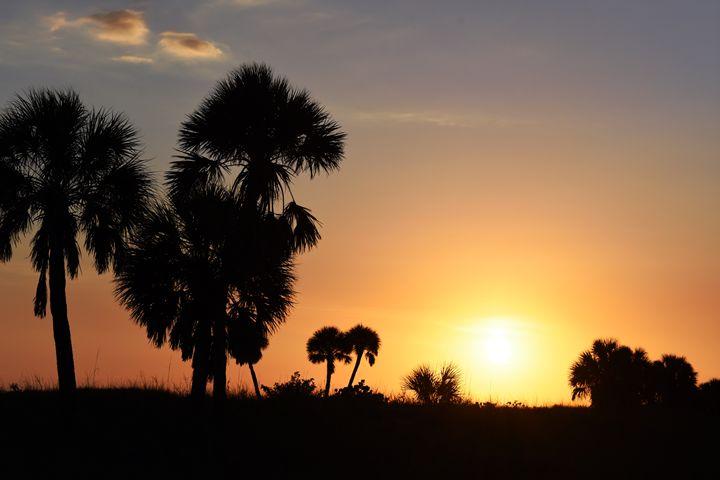 Sunset Through the Trees - JAJ Photography