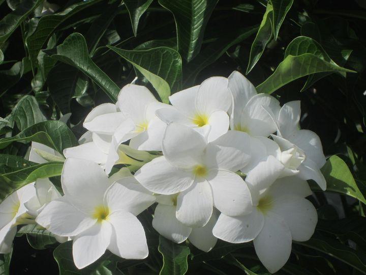 White Flowers - JAJ Photography