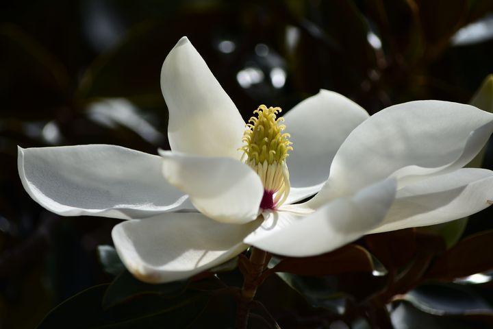White Flower - JAJ Photography