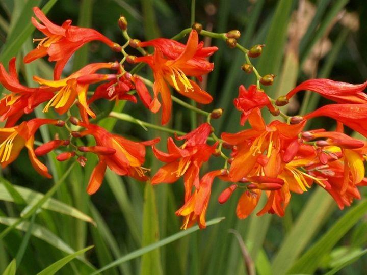 Orange Flowers - JAJ Photography