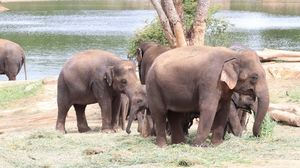 Group of elephant near river