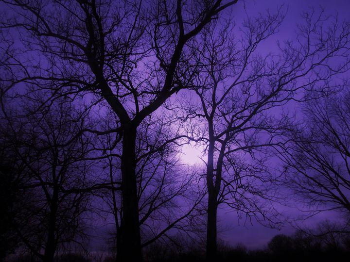 Purple Sky and Dark Trees - Eli Grey