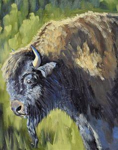 Bison defender of wildlife