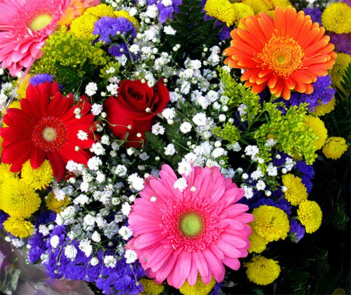 Splender of Flowers - DMO