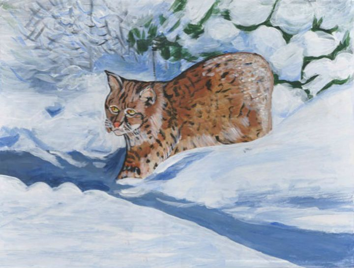 Bobcat In Snow - DMO