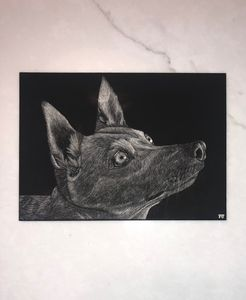 Carolina Dog Scratchboard