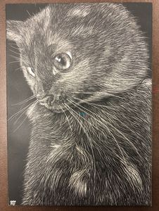 Black Cat Scratchboard