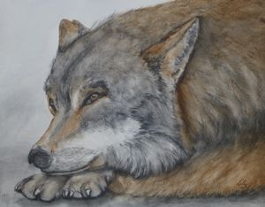 Red Wolf Original Painting
