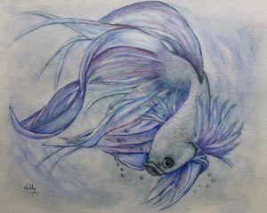 Betta Fighting Fish Painting