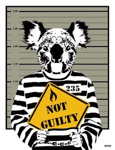 Koala not guilty