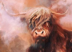 Red Highland Coo