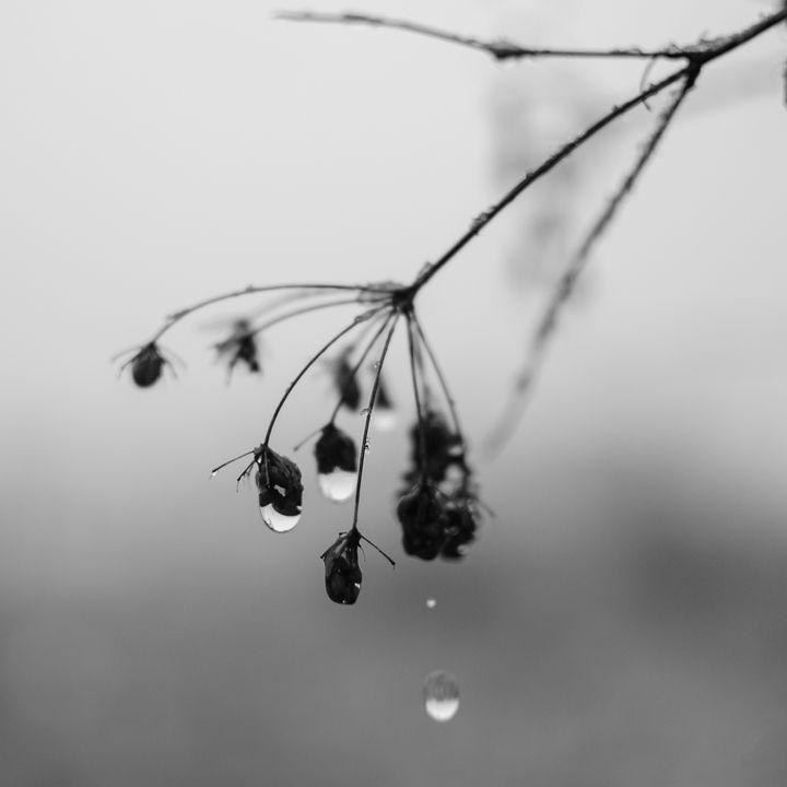 Drops - Vrabiuta Albert