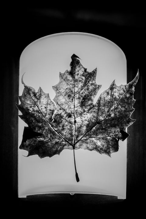 A Leaf - Oleg Sotnik