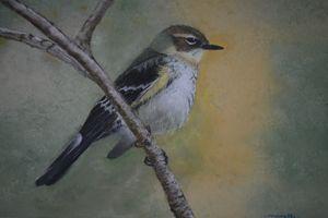 Yellow-rumped Warbler - Carmen Fine Art Gallery