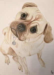 Pug - Rebecca Bellomo