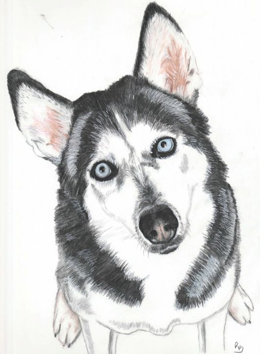 Husky - Rebecca Bellomo