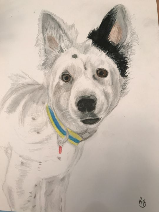 White spotted dog - Rebecca Bellomo