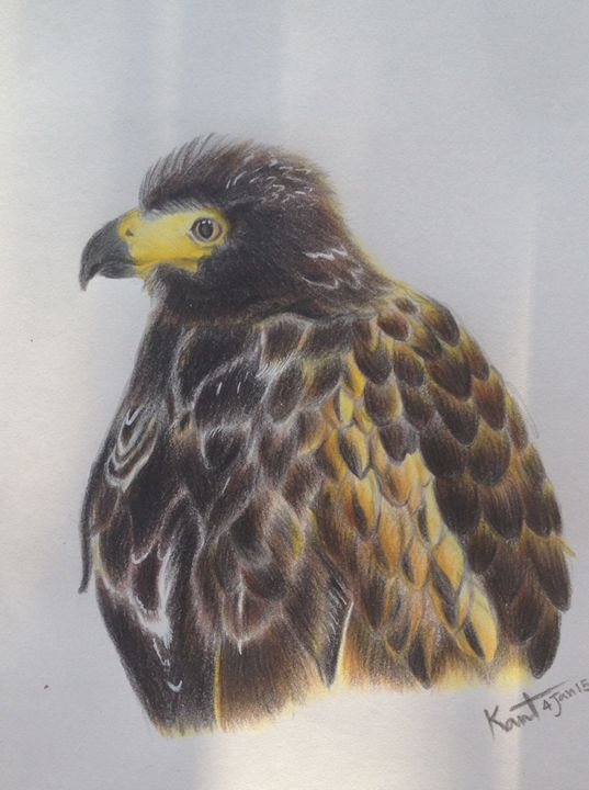 Eagle - Kant