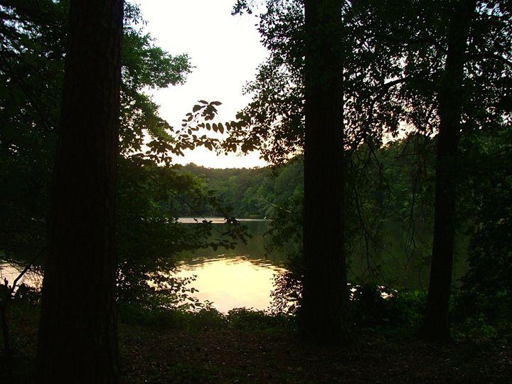 Secret Forest - Art in Life