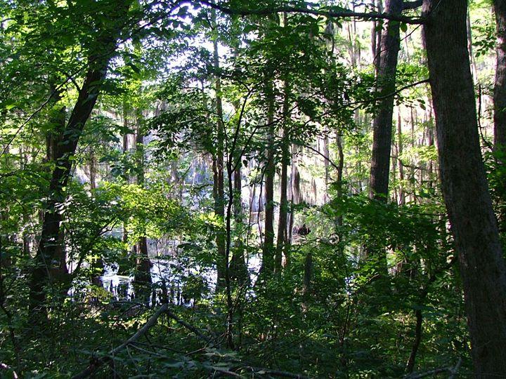 Sweet Swamp - Art in Life