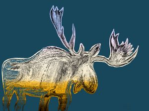 Moose by Night