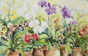 Orchids - Ingrid Dohm