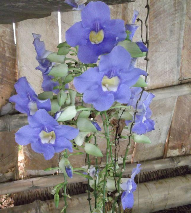 Small Purple Flowers - Laura Nybeck's Art