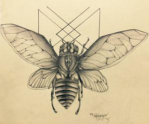 Longevity Cicada