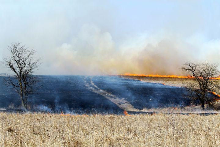 Road Through The Prairie Burn - Catherine Sherman
