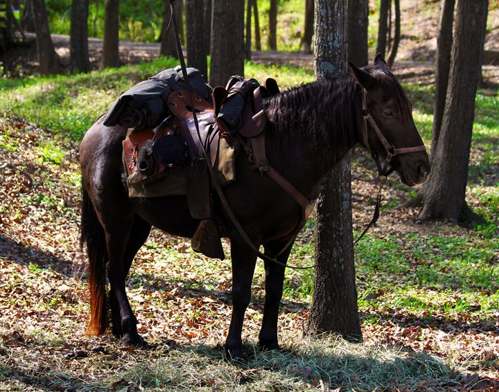 U.S. Cavalry Horse in Texas - Catherine Sherman