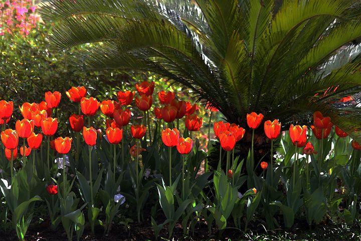 Tulip Row Under a Palmetto Tree - Catherine Sherman