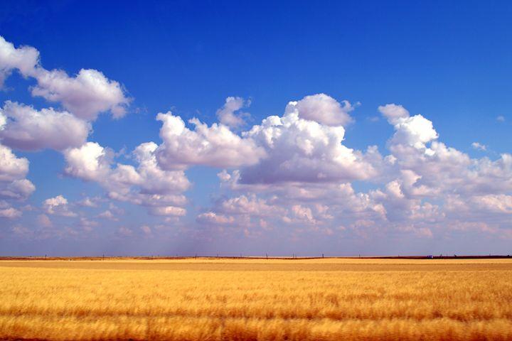 Southwestern Kansas Wheat Field - Catherine Sherman