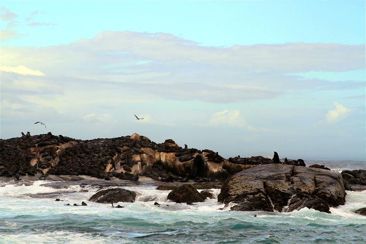 Seal Island South Africa - Catherine Sherman